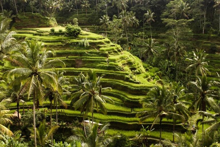 indonesia-178