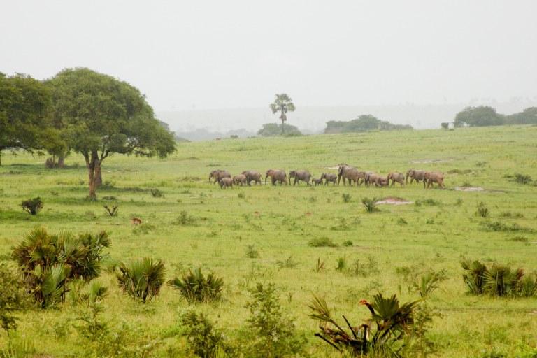 bwana tembo-11