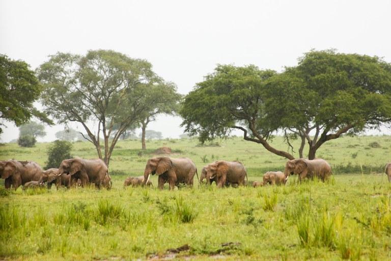 bwana tembo-12