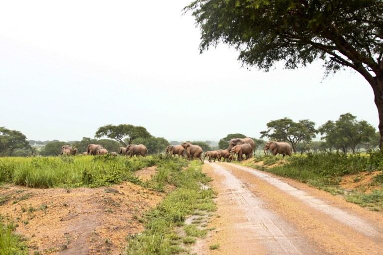bwana tembo-13