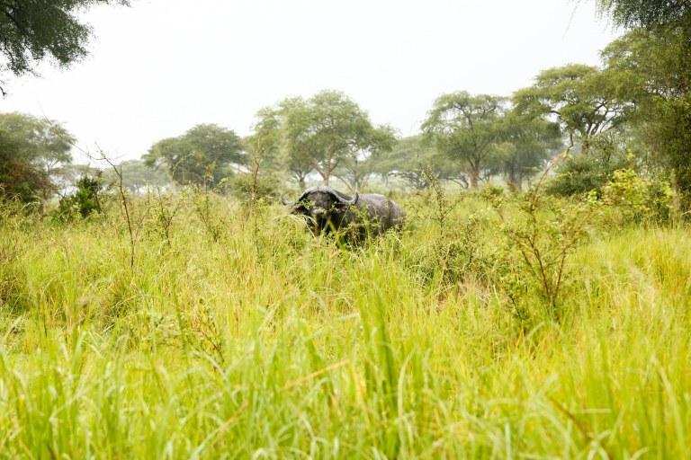 bwana tembo-16