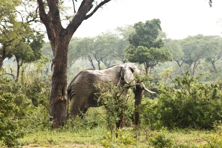 bwana tembo-24