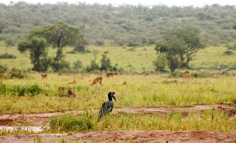 bwana tembo-25