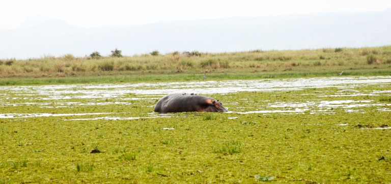 bwana tembo-32