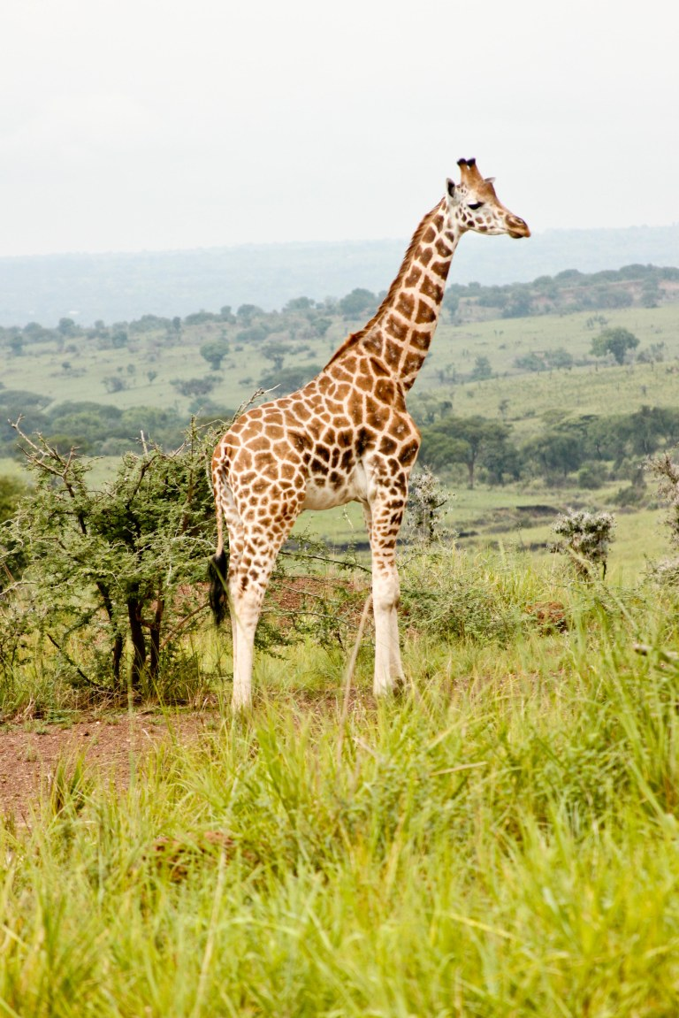 bwana tembo-35