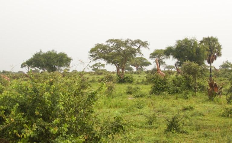 bwana tembo-5