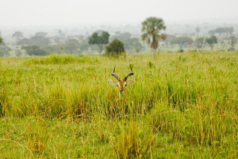 bwana tembo-9